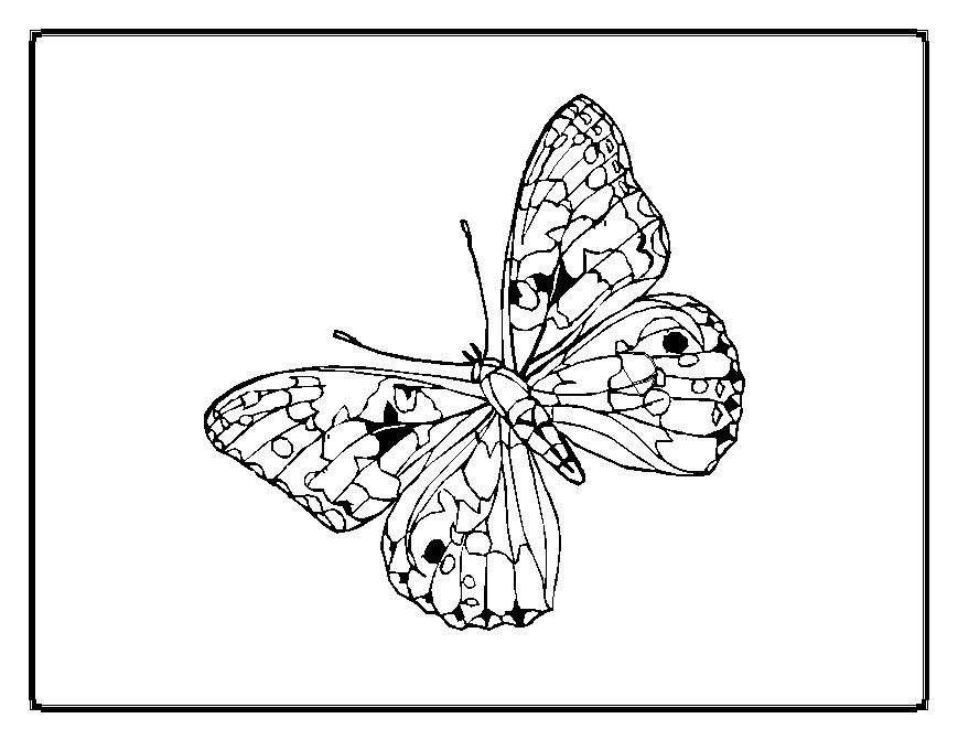 coloring pages painted lady butterfly - photo#29
