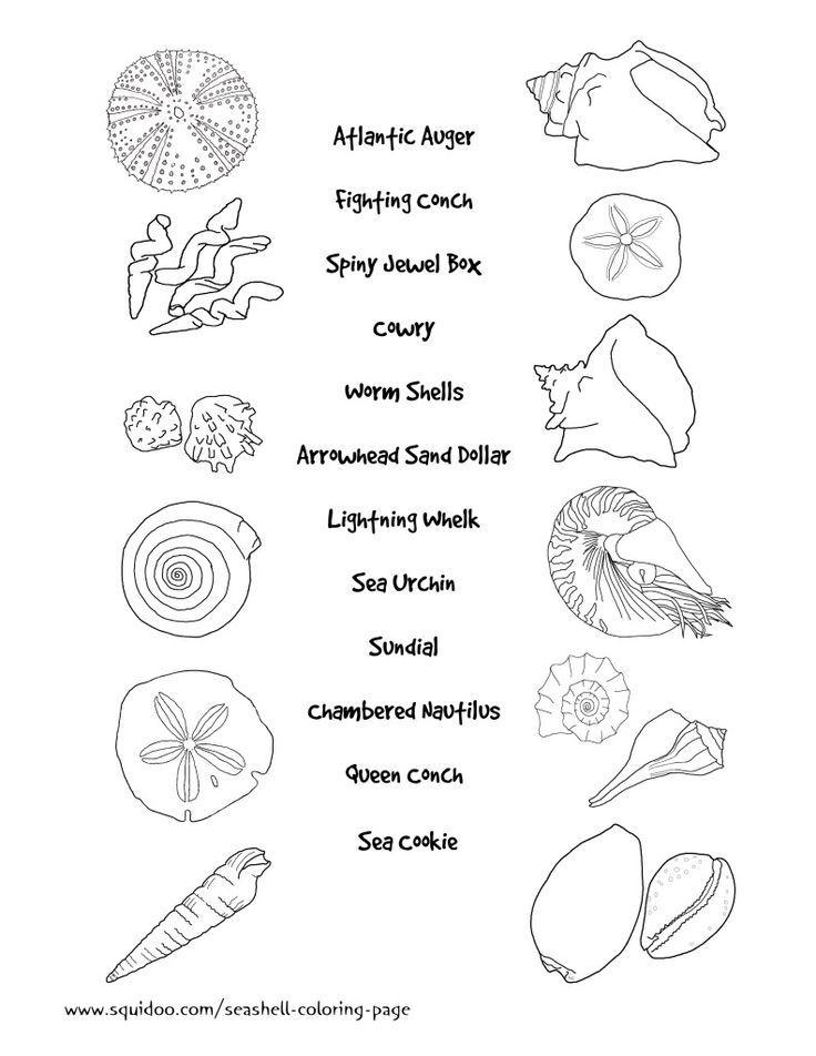 Seashell Coloring Sheets