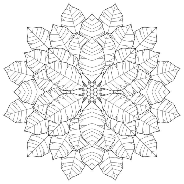 pointsettas coloring pages - photo#26