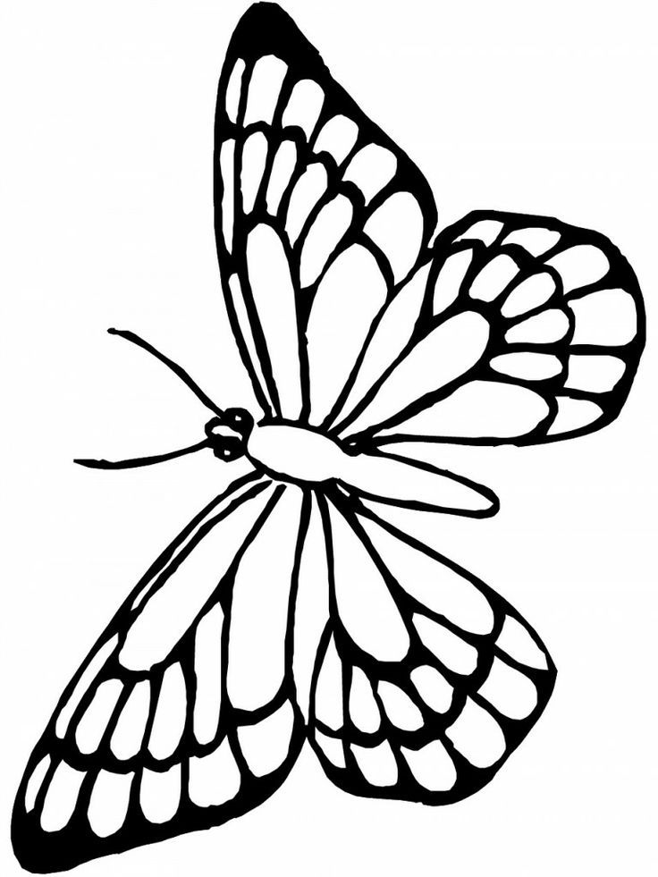 Monarch-Butterfly-Coloring-Page-768x1024 | Tracing Club