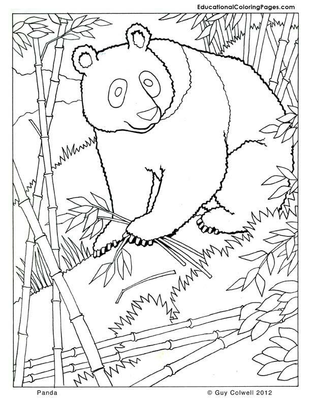 Panda Bear Coloring Pa...