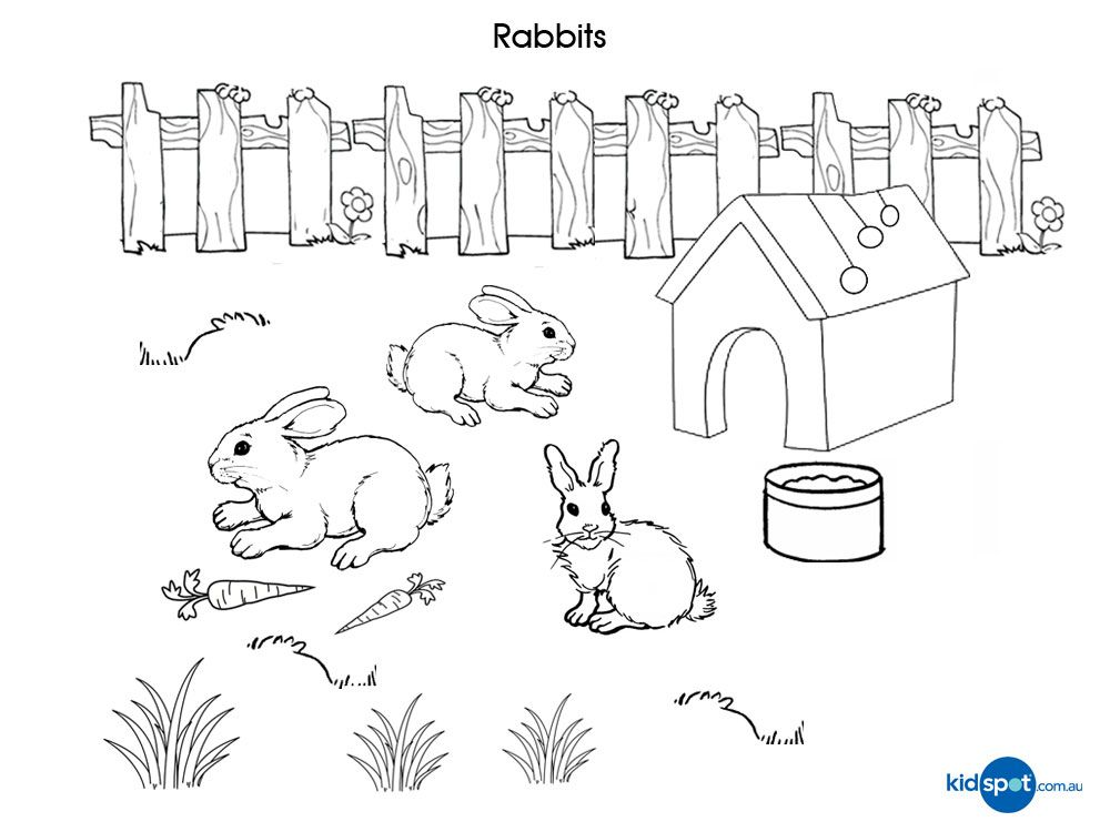 Rabbits - Free Printable - Colouring Pages