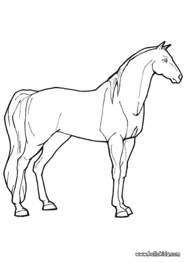 real horse coloring pages - photo#12