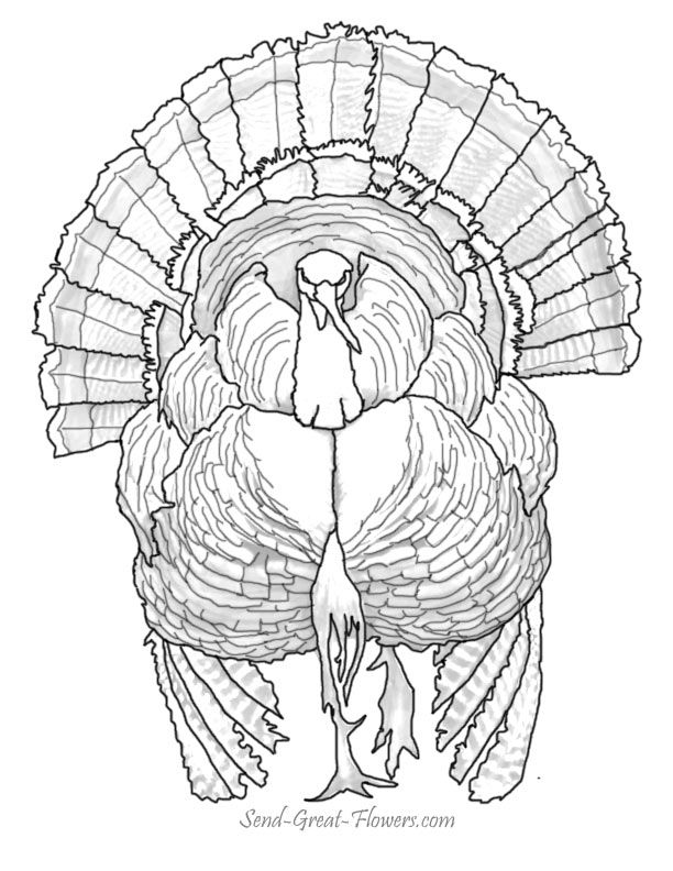 turkey coloring book pages coloring home Realistic Turkey Coloring Pages  Wild Turkey Coloring Pages Printable