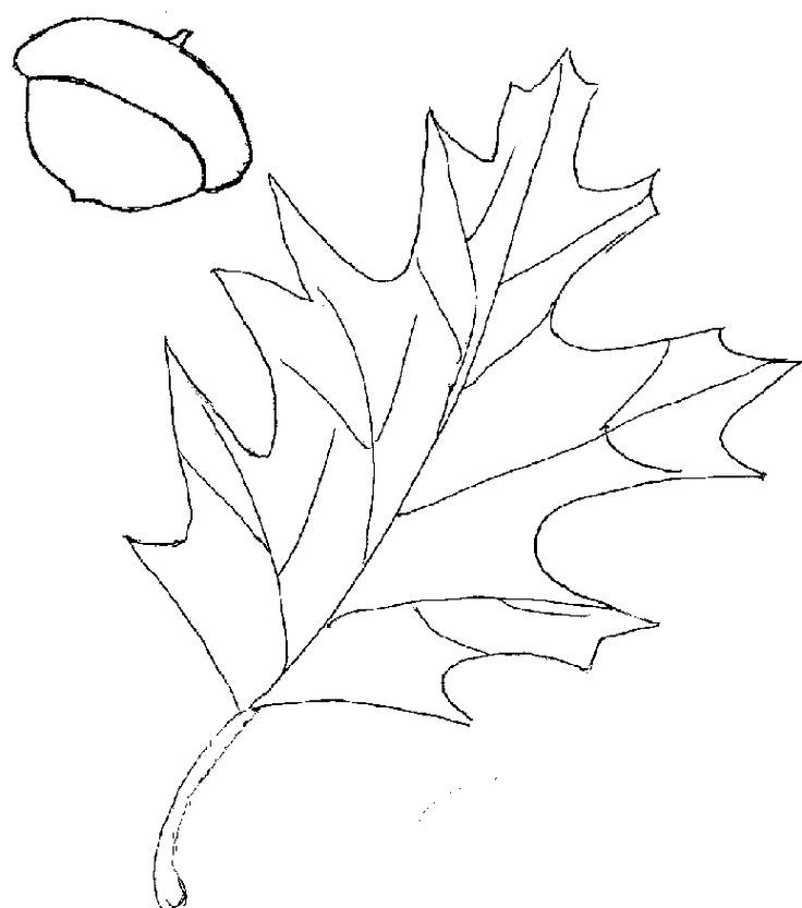 coloring pages oak leaf - photo#27
