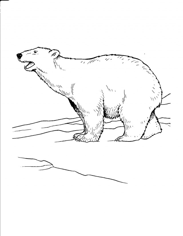 tundra coloring pages for kids - photo#5