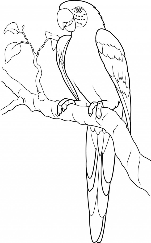 Macaw Colouring Pages 207036 Scarlet Macaw Coloring Page Colouring Pages For