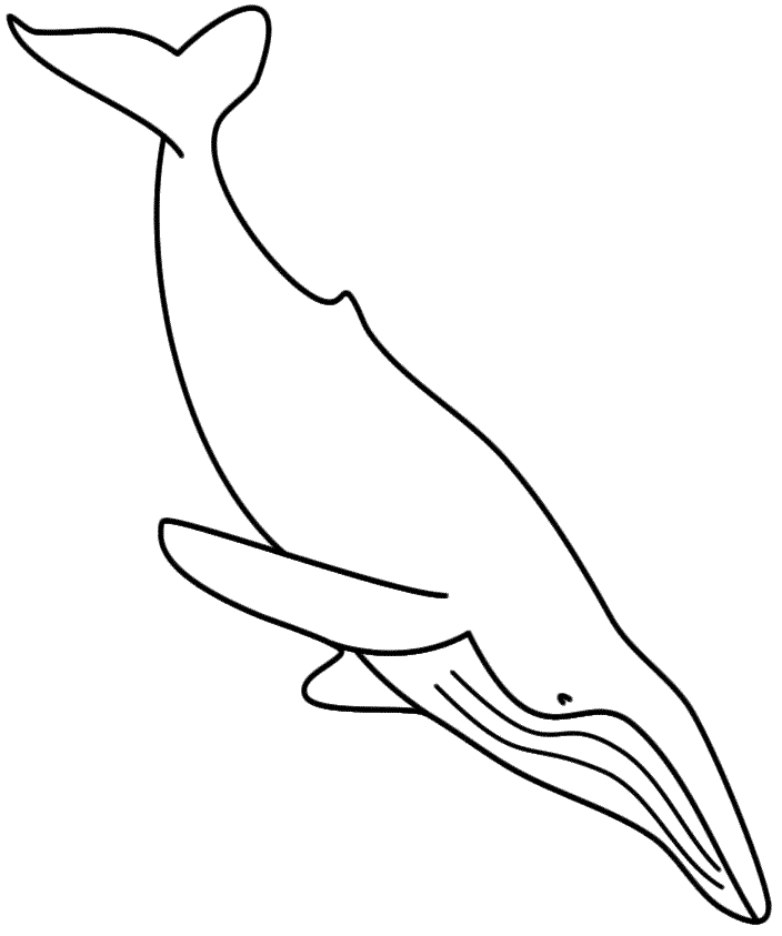 Humpback Whale - Coloring Page (