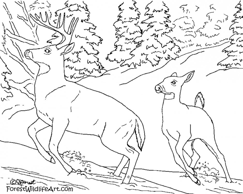 free coloring pages rainforest animals - photo#10