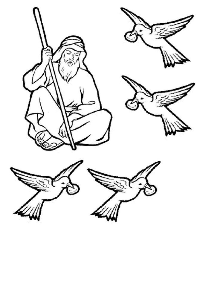 Pin elijah ravens colouring pages on pinterest for Ravens coloring pages