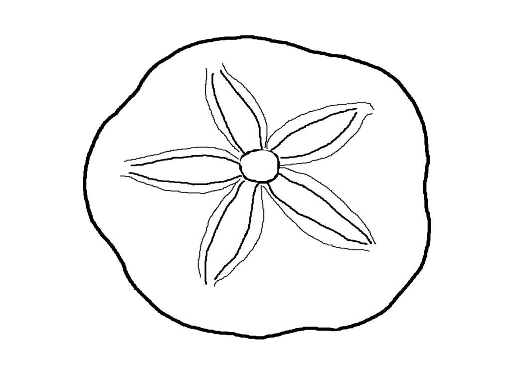 Seashell Coloring Pages Coloring Home