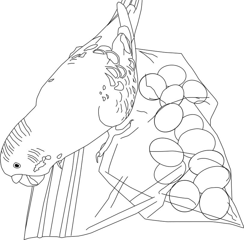 flying parakeet parrot coloring pages cute cartoon parakeet