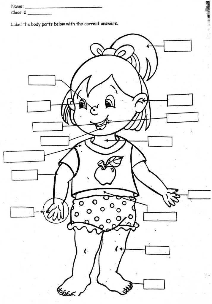 body part coloring pages - photo#8