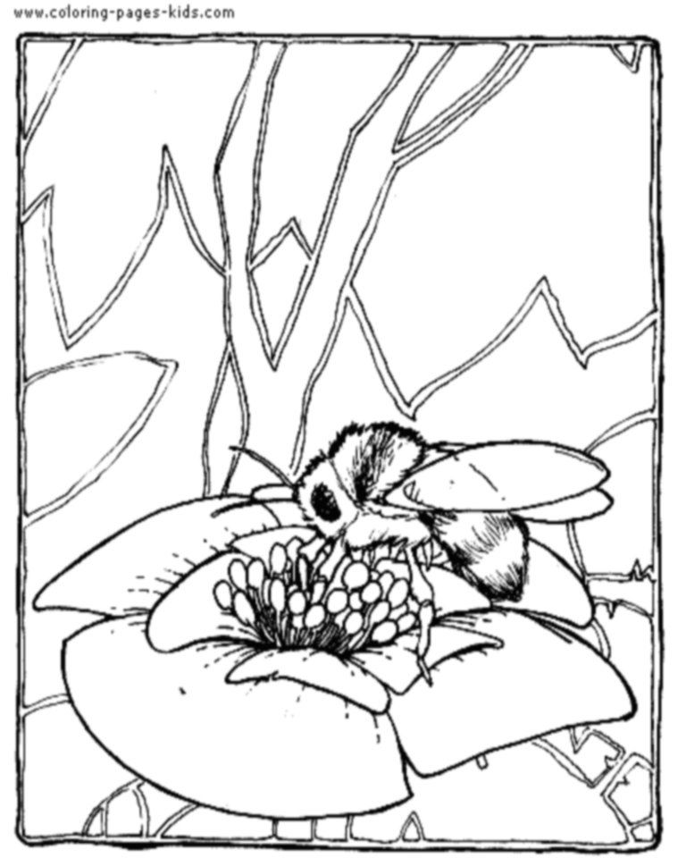 Bee Coloring Pages - Coloring Home
