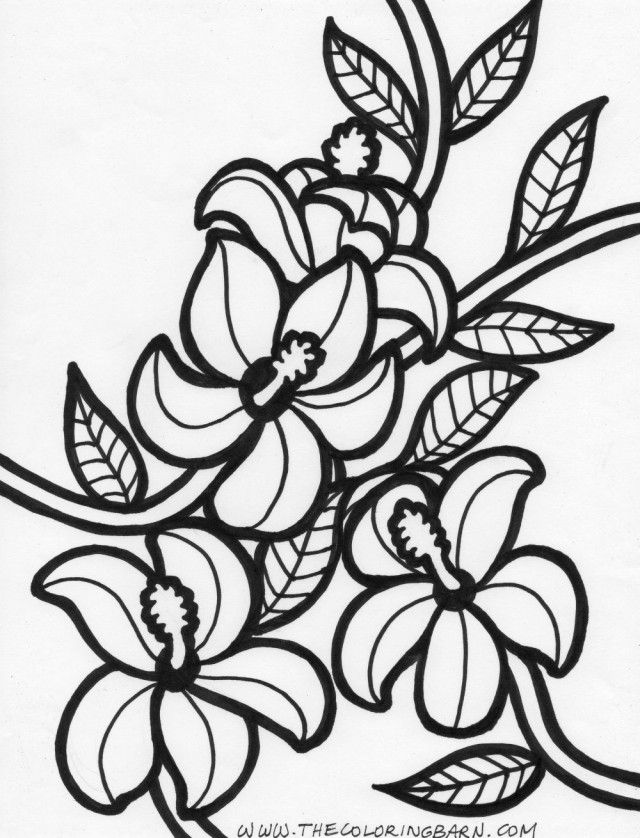 printable hawaiian flowers coloring pages - photo#34