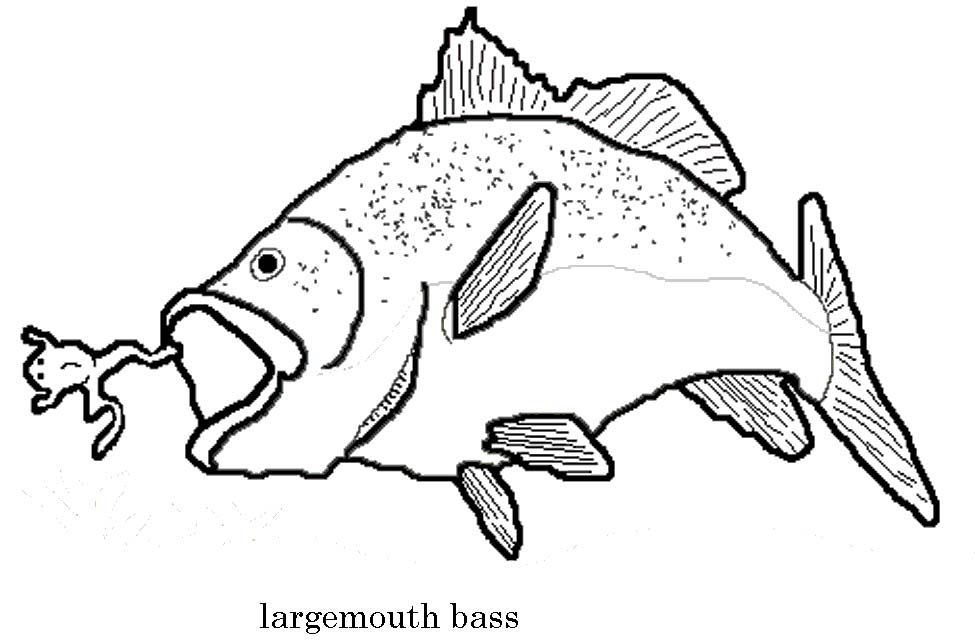 Largemouth Bass Coloring Page - Coloring Home