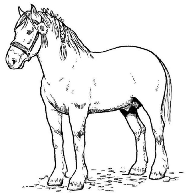 real horse coloring pages - photo#2