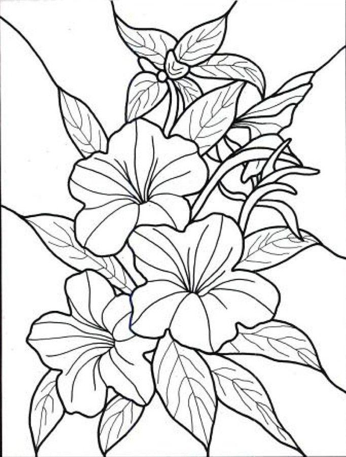 Hawaiian Coloring Pages Pdf