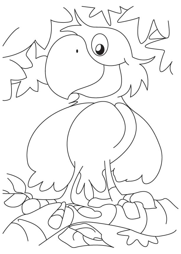Free Parrot Pictures To Colour, Download Free Clip Art, Free Clip ... | 860x613