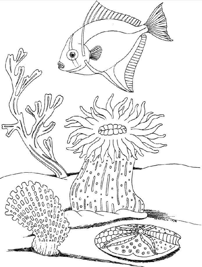 Free Ocean Life Coloring Pages - AZ Coloring Pages