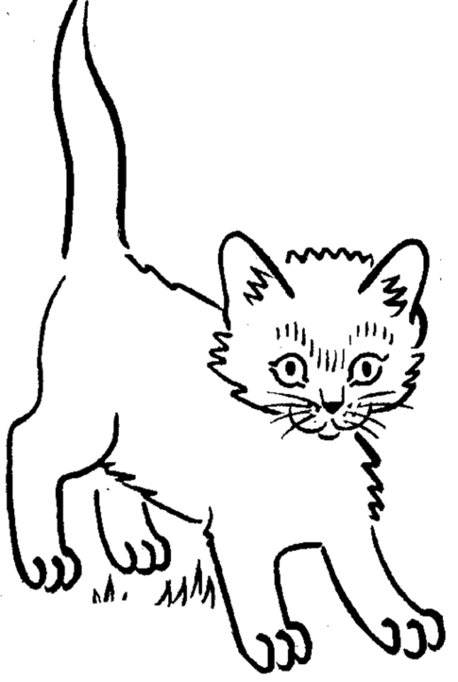 cat coloring pages realistic cat - photo#34