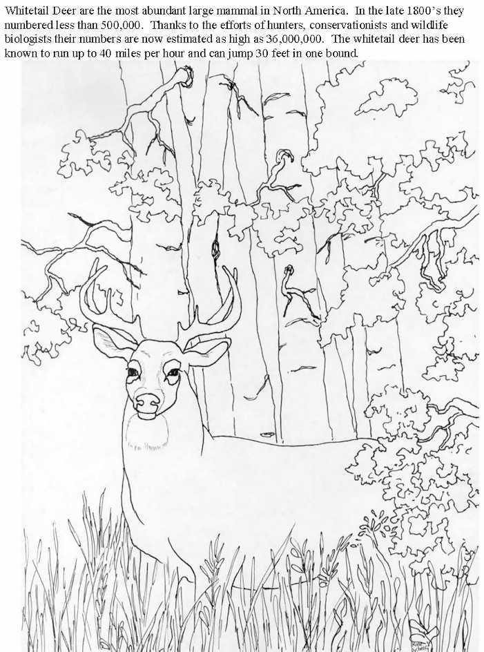 Whitetail Deer Coloring Page - Free Deer Coloring Pages ...   944x701
