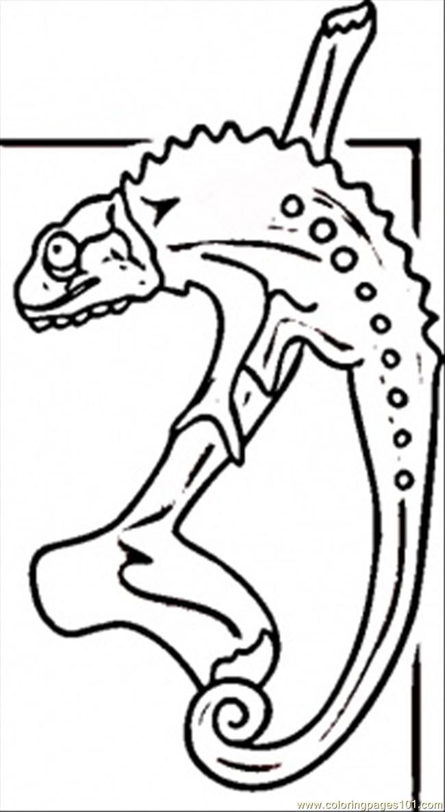 Coloring Pages Lizards  Coloring Home