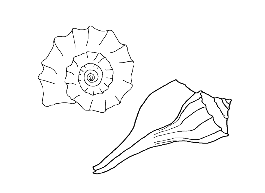 Animal Coloring Free Printable Seashell Coloring Pages For Kids
