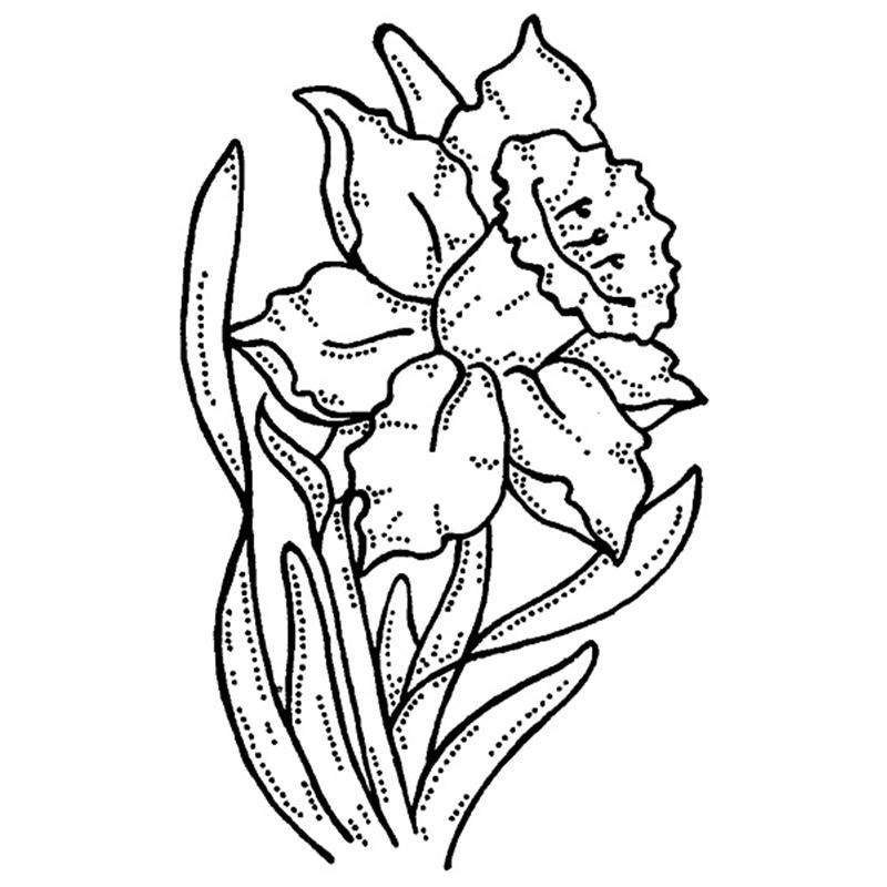 Daffodil Pictures To Print Coloring Home Daffodil Coloring Page