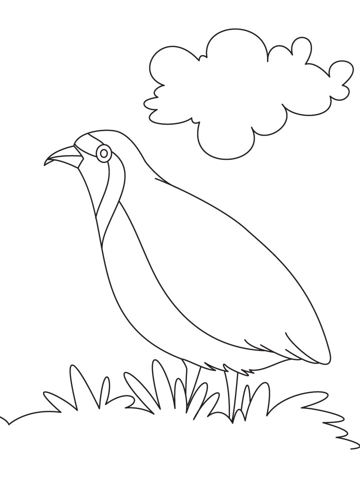 Puffin Coloring Page - AZ Coloring Pages