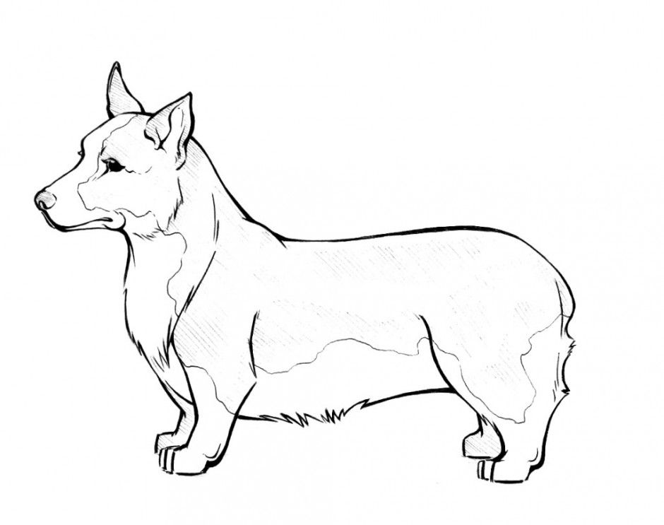 coloring pages of dog breeds - photo#20