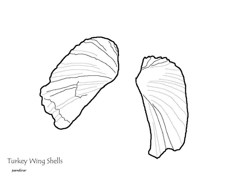 Lifestyle Printable Seashell Coloring Pages Not Just For Kids