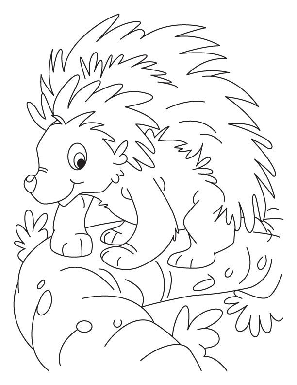 Porcupine Coloring Page Coloring Home