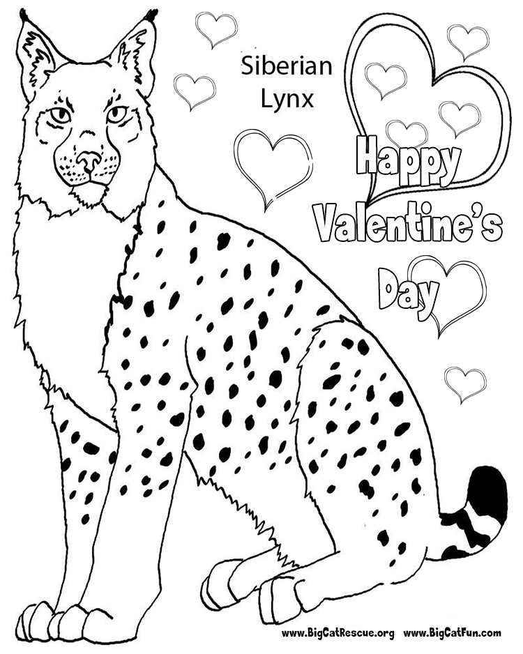 lynx coloring pages for kids - photo#32