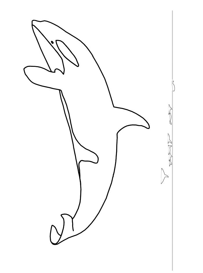 Killer Whale Coloring Page Az Coloring Pages Killer Whale Coloring Pages