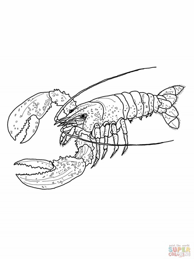 lobster pictures for kids az coloring pages