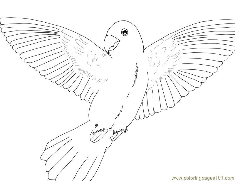 Flying Macaw Coloring Page Macaw Parrot Colouring Pages