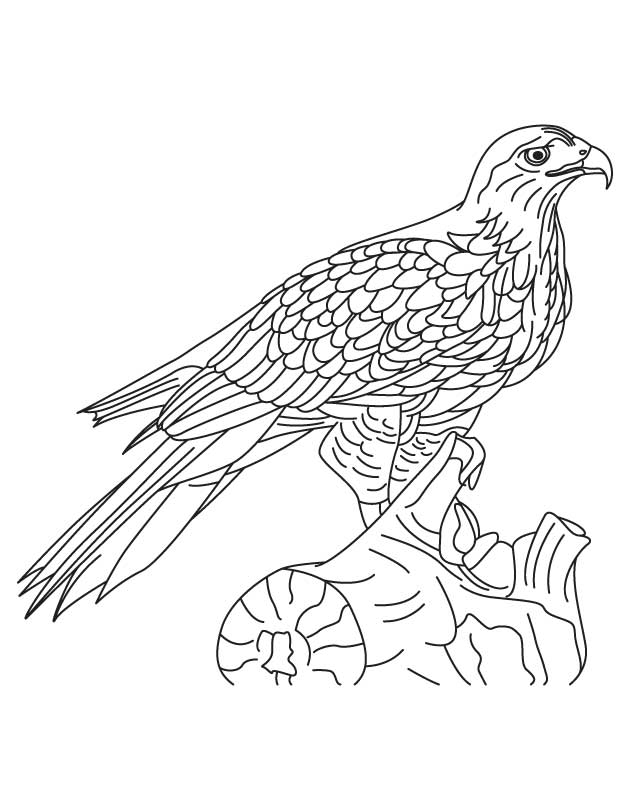 Quail Coloring PageQuail Coloring Page