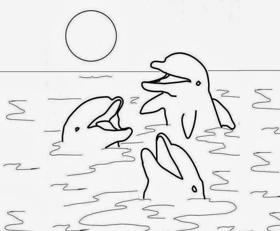 colour drawing free wallpaper dolphins coloring drawing free