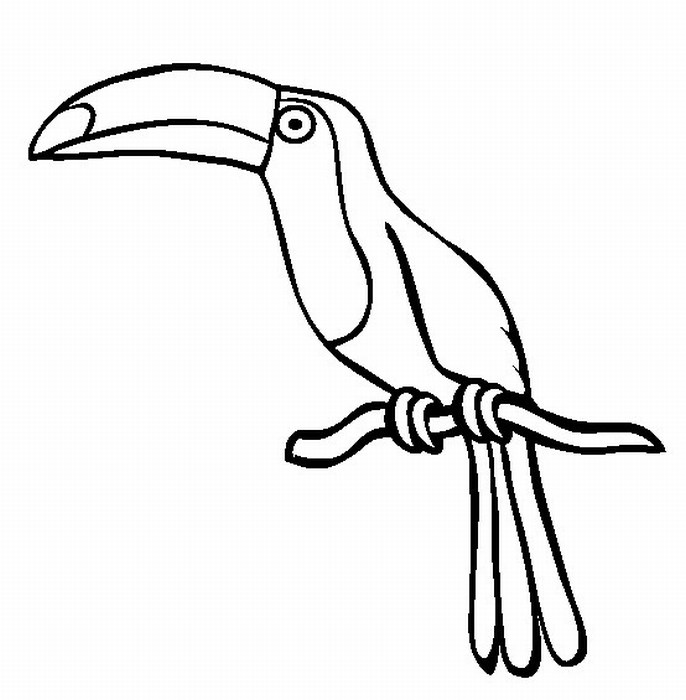 free coloring pages rainforest animals - photo#32
