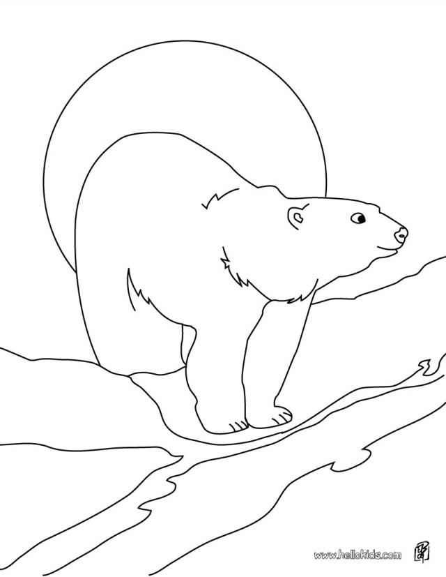 Antarctic Animals Coloring Pages