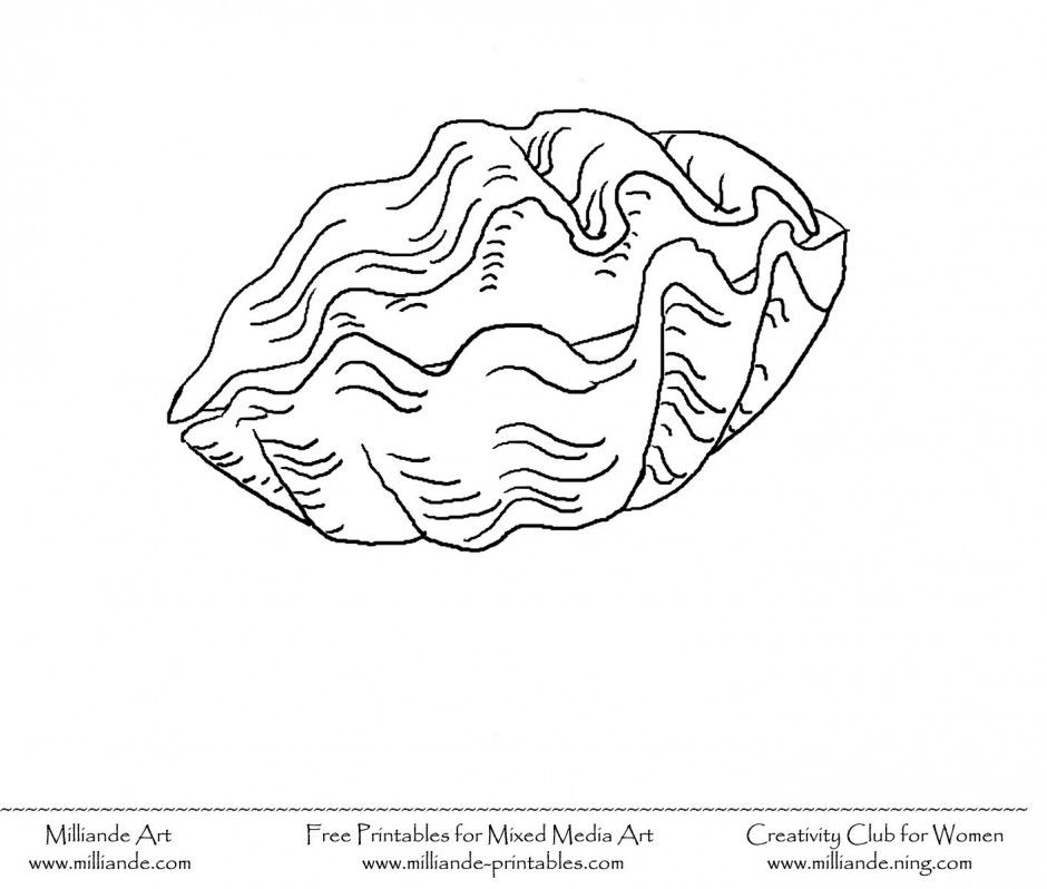 Seashell coloring pages for kids coloring home for Seashell coloring pages printable