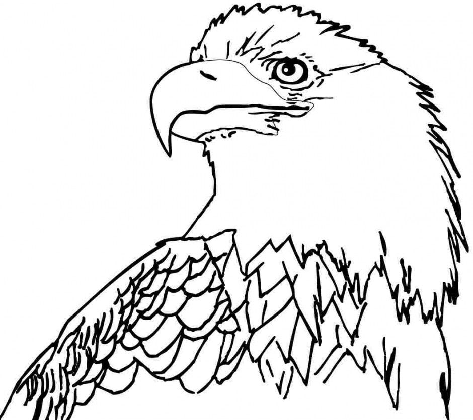 free printable coloring sheets animal eagle for little kids 126493