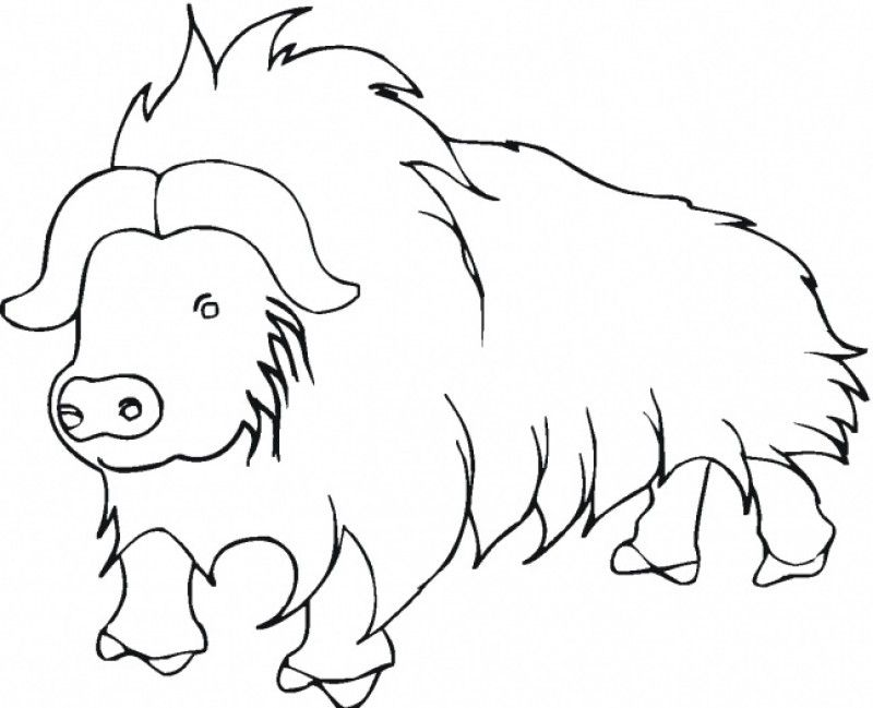 Coloring Pages Buffalo Home