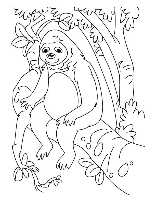 Sloth Coloring Pages Coloring Home