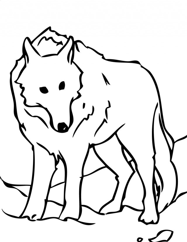 arctic wolf coloring pages - photo#9