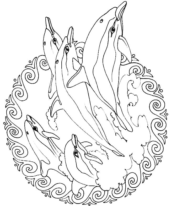 Dolphin Animals Printable Coloring Pages