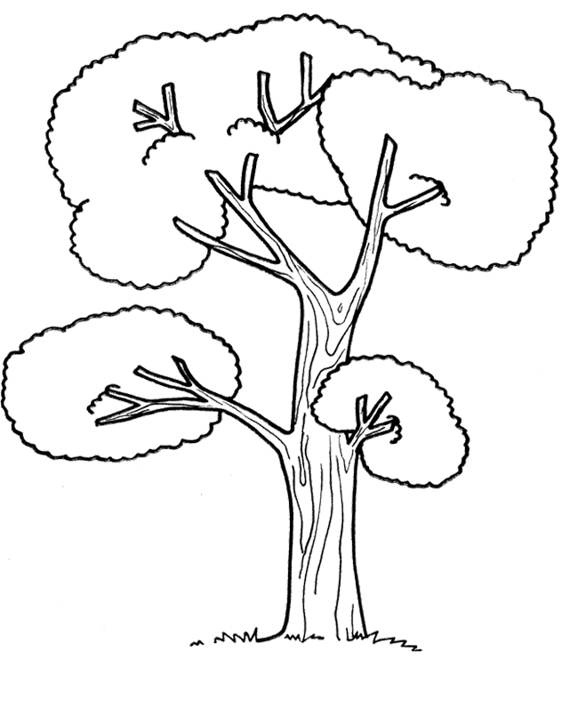 Coloring Pages Big Tree Big Tree Coloring Page