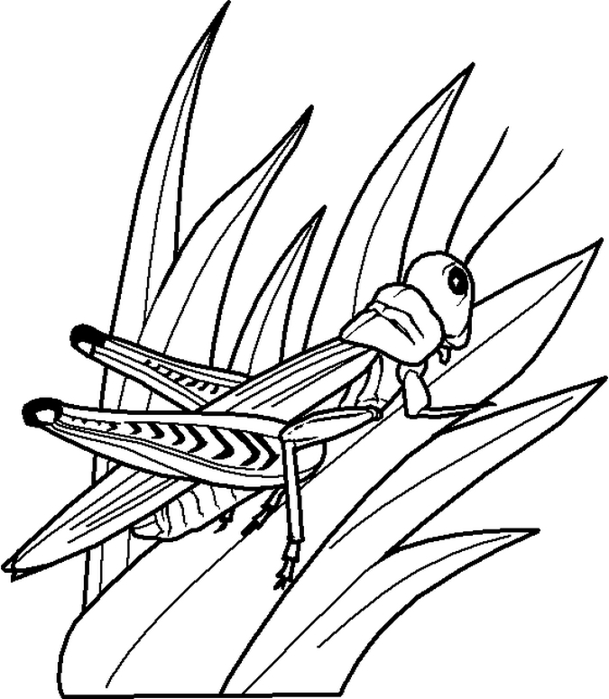 Coloring Pages Insects AZ Coloring