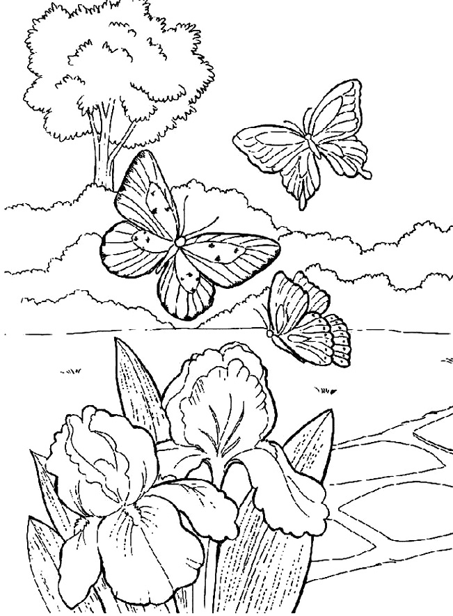 Coloring Pages Flowers Butterflies